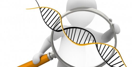 Charakterystyka wektorów genetycznych
